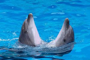 Дельфинарий «Оскар» в Кирилловке