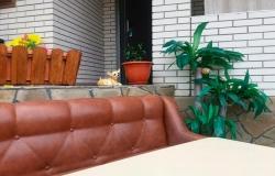 Пальма в Кирилловке Гостевой Дом 170